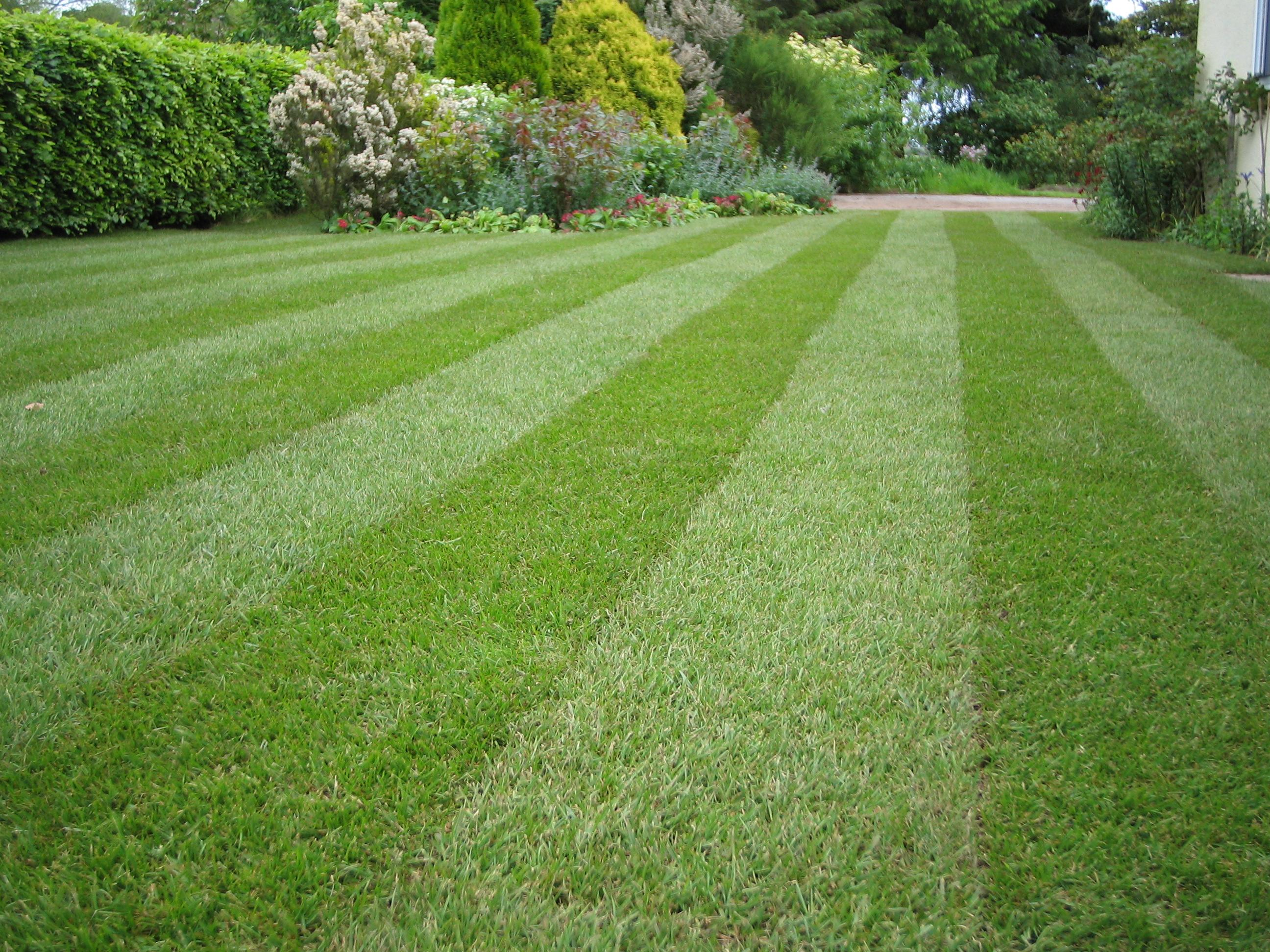 Dj turfcare blog news and tips on lawn care part 2 for Best garden maintenance